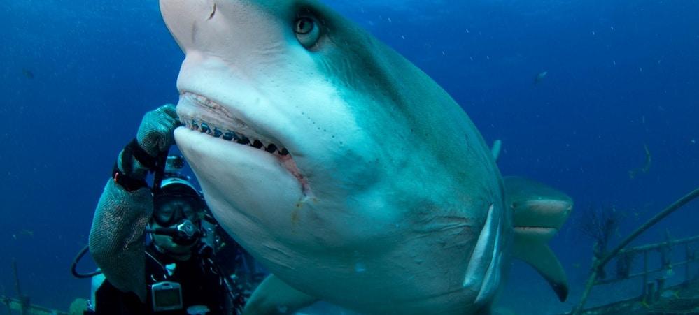 shark tank louisville